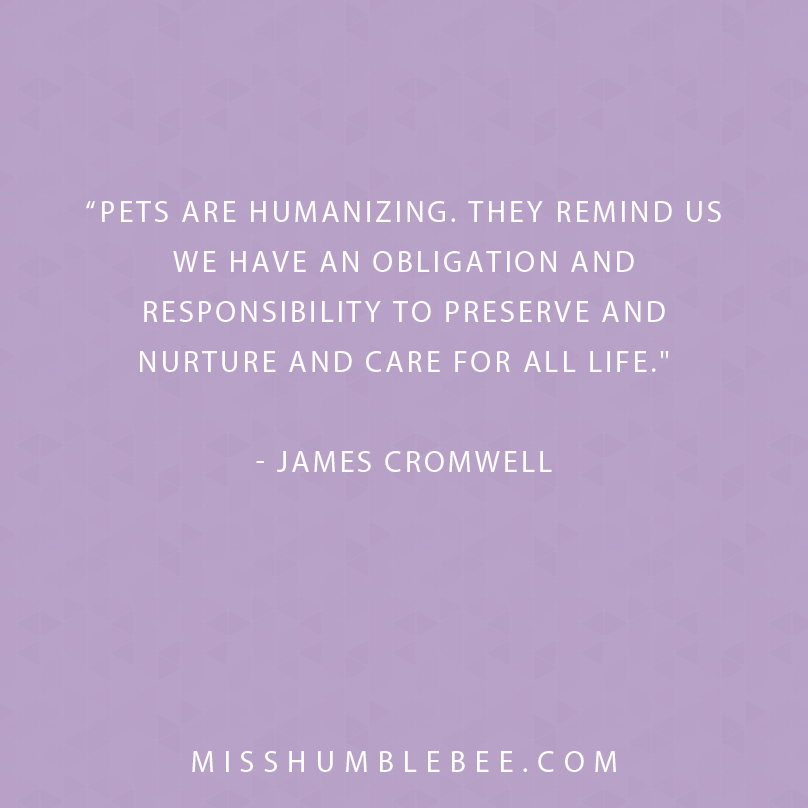 Quote of the Day - Pets
