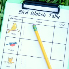 Bird Watching Observation Activity