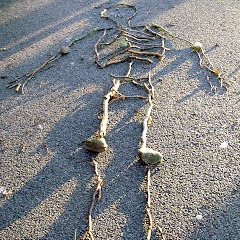 Stick Skeleton