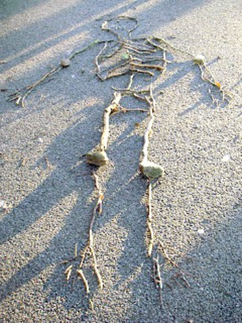 creative star learning making skeletons using sticks