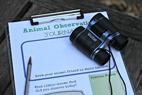 animal observation activities for teaching a child to focus and listen edventures with kids