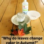 A science experiment to learn why leaves change color in the fall
